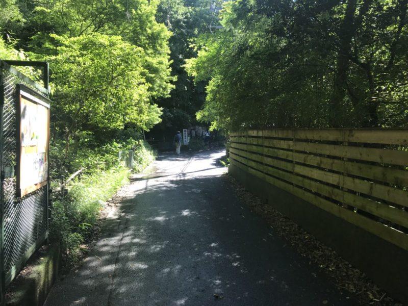明月院の先の道路