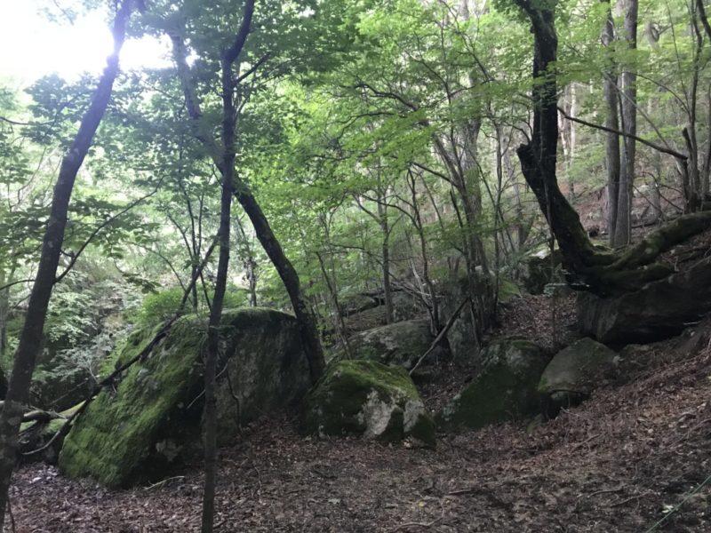 歩き始めの森